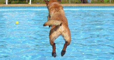 Hondenplons in Zwembad De Fakkel