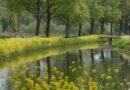 Ontdek IJsselmonde tipt … Heerlijk wandelen en fietsen op Eiland IJsselmonde